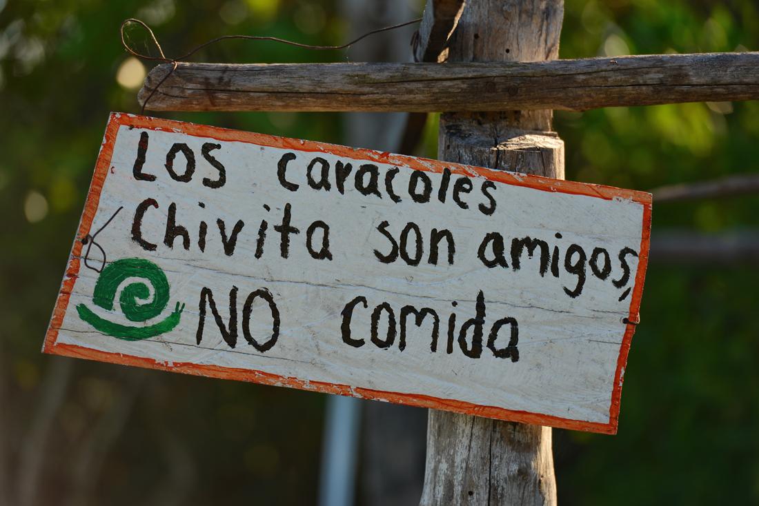 """""""Ślimaki Chivita są przyjaciółmi, nie jedzeniem"""""""