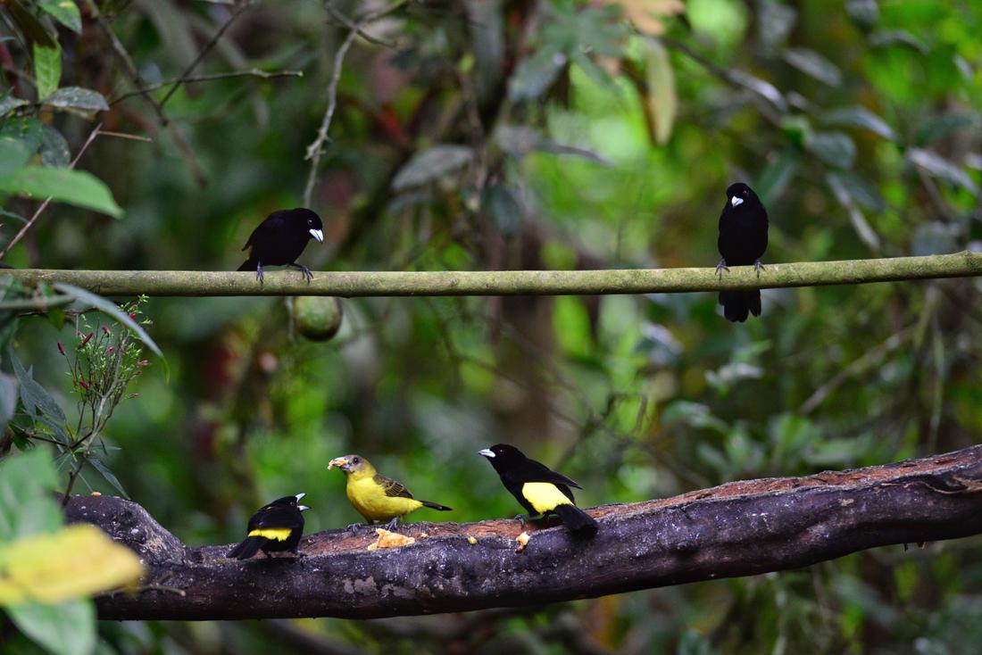 Ptaki Mindo