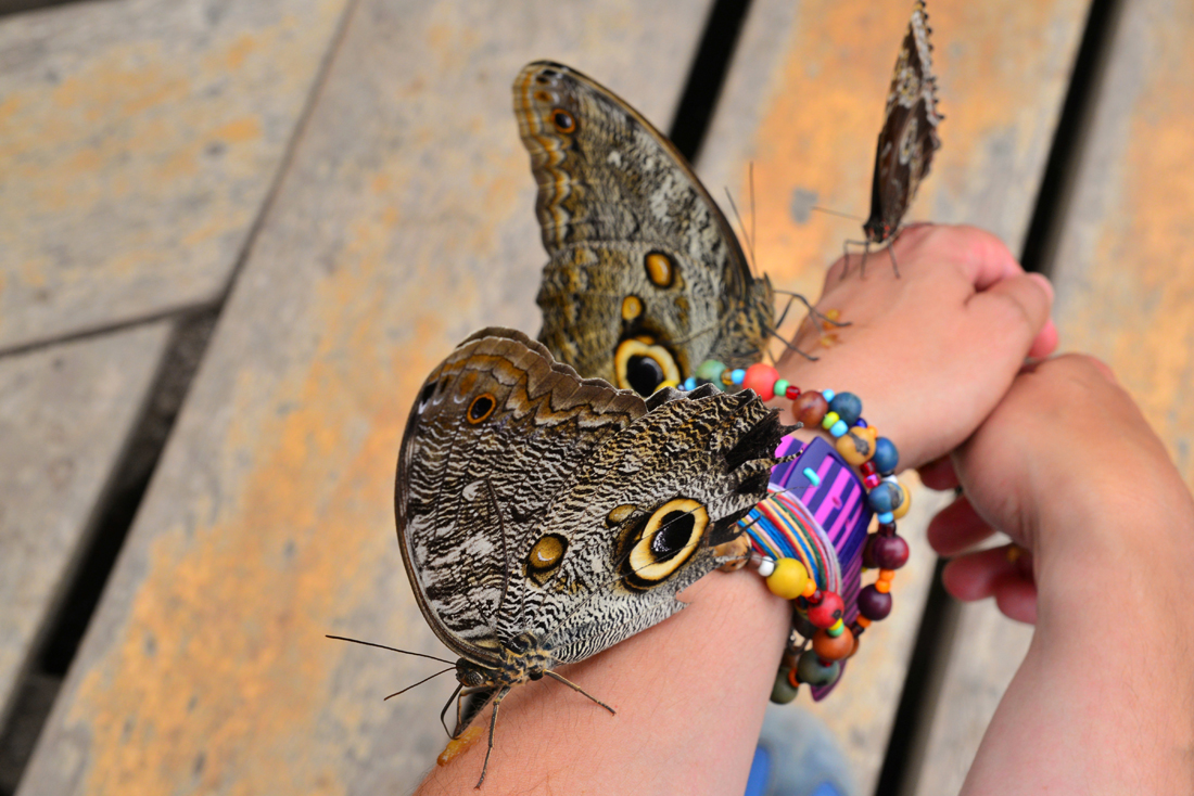 Motyle Mindo Ekwador