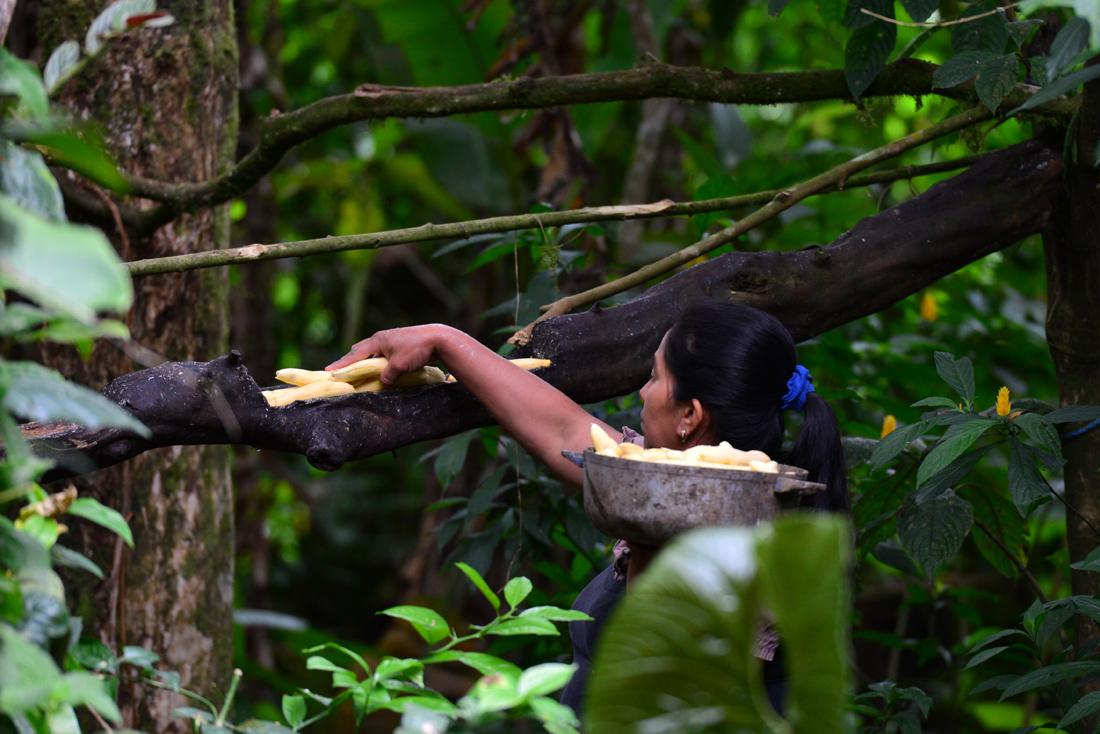 Mindo Ekwador