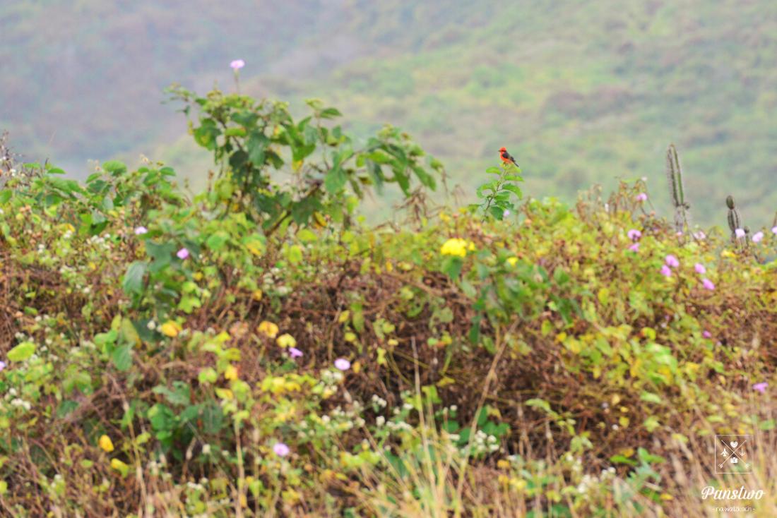 Isla de la Plata Ekwador